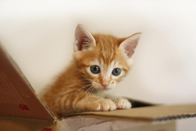 【無料】ネコ好きのため人気ゲームアプリ5選!育成・鳴き声・金魚まで