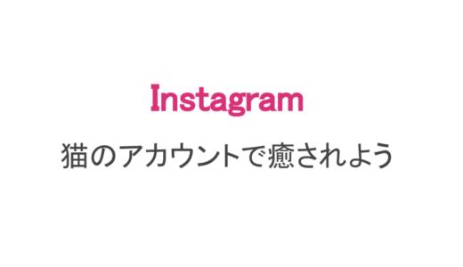 【インスタ】癒されるネコの人気動画ランキング(日本・海外)